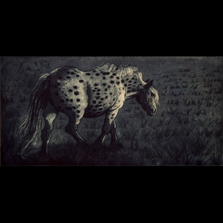 Appaloosa Horse, Port Meadow, British Spotted Pony, Equine Artist, Equine Illustrator